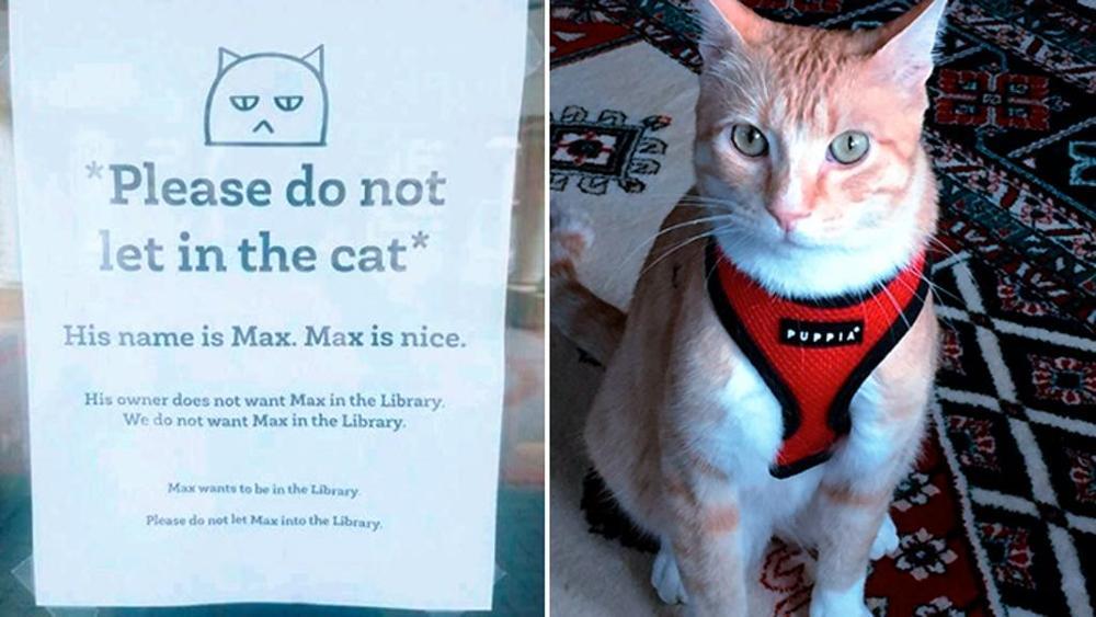 Gatto bandito dalla biblioteca: Max è diventato famoso