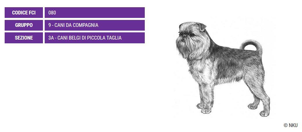 Griffone di Bruxelles, carattere e prezzo - Razze cani