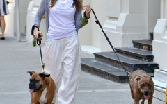 Jessica Biel Loves Her Dogs and walk them around Hollywood
