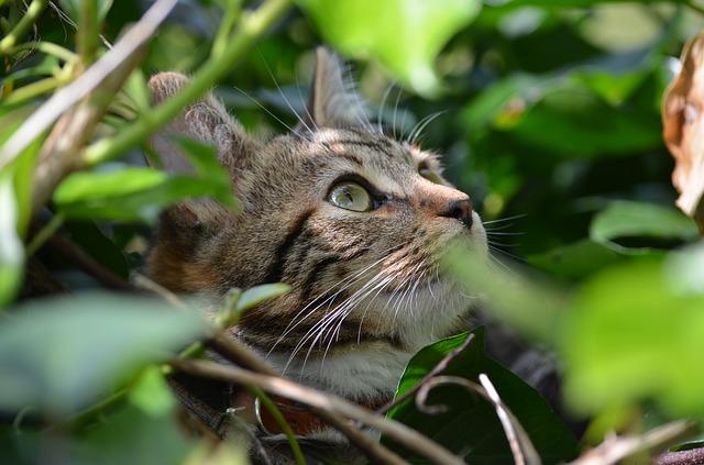 Carattere del gatto: test per conoscerlo meglio