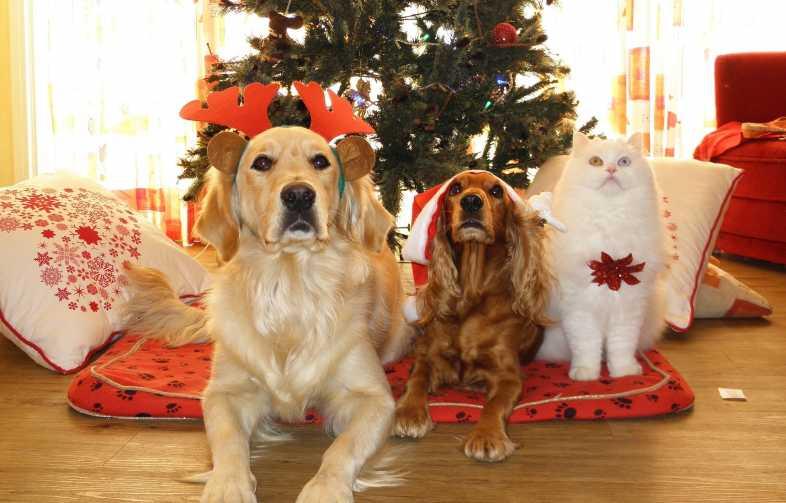 Cani e gatti a natale gli auguri e le immagini pi belle for Animali a natale