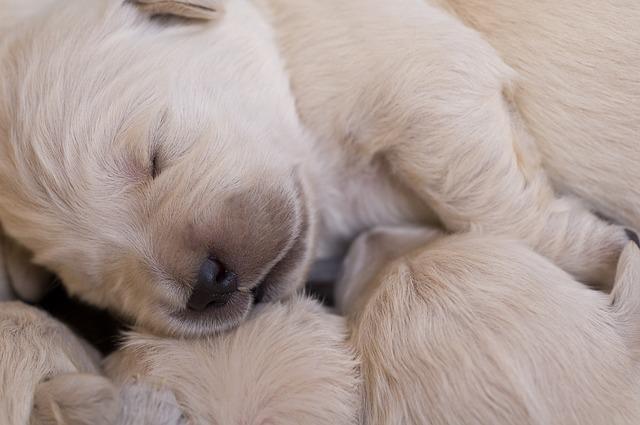 Soñar con perro: ¿te ha pasado?
