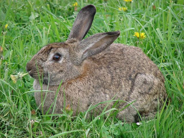 Denti del coniglio: l'importanza di rosicchiare