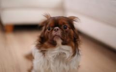 Perché il cane ha paura dei botti e dei fuochi d'artificio?