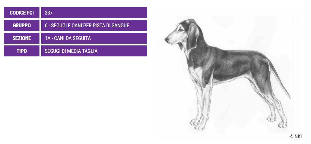 Segugio italiano, carattere e prezzo - Razze cani