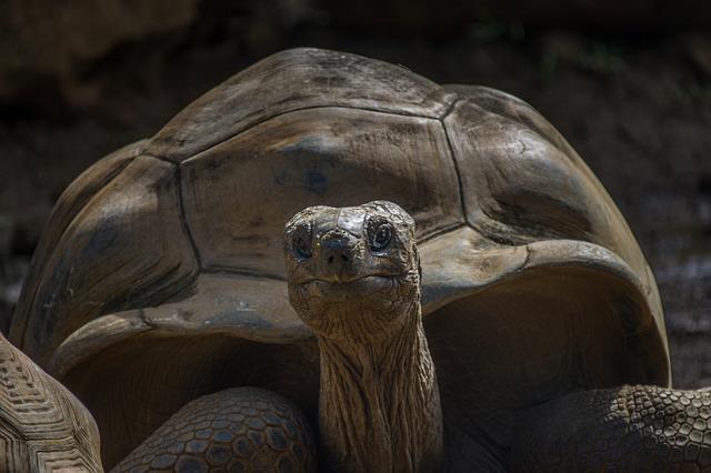 Tartaruga è femmina o maschio? Scopri il sesso in 3 mosse