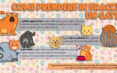 Infografica: come prendere in braccio un gatto