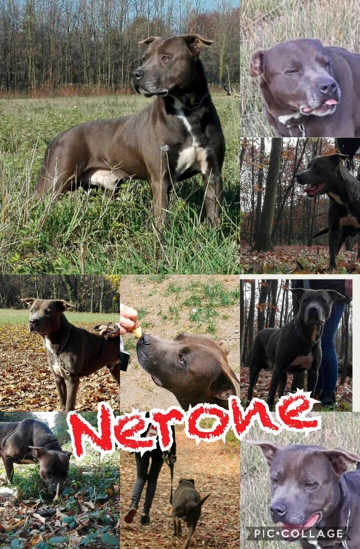 Nerone cerca casa: appello per adozione