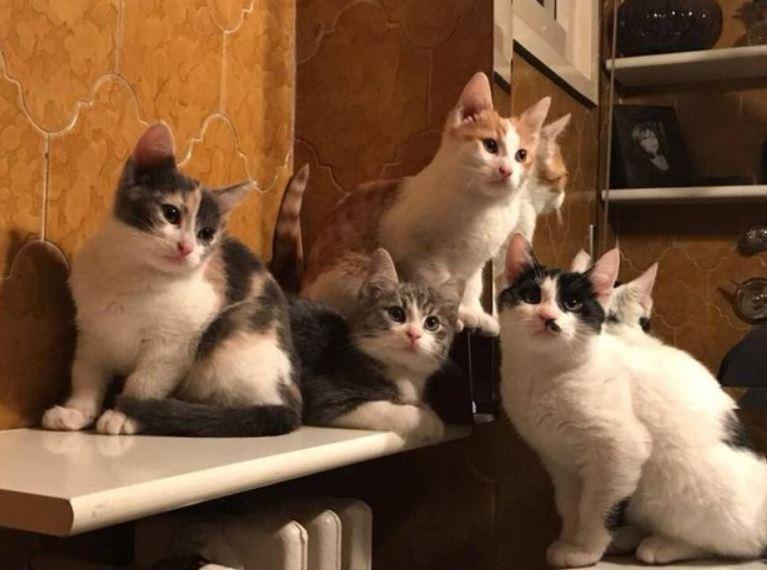 Gatti rinchiusi in cantina: sono stati salvati e adottati