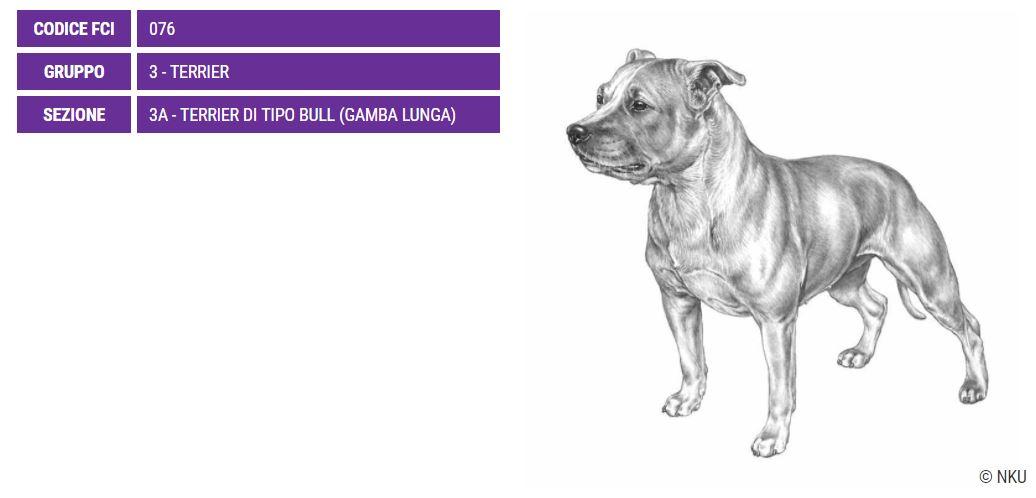 Staffordshire Bull Terrier, carattere e prezzo - Razze cani