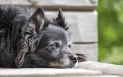 Problemi di movimento cani: quali sono i più comuni?