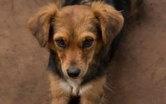 Garrapatas perro: elimina las garrapatas de tu perro