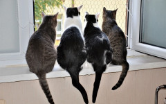 "Herding Cats: the meaning of ""herding cats"""