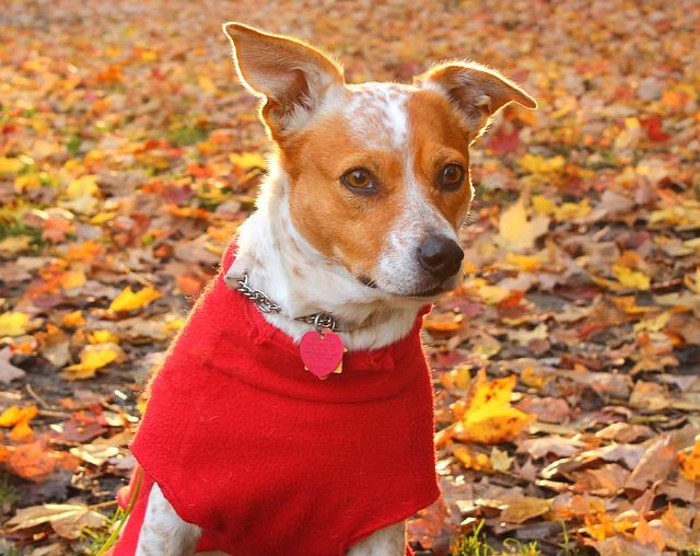 Ridurre ansia da separazione nel cane: come fare?