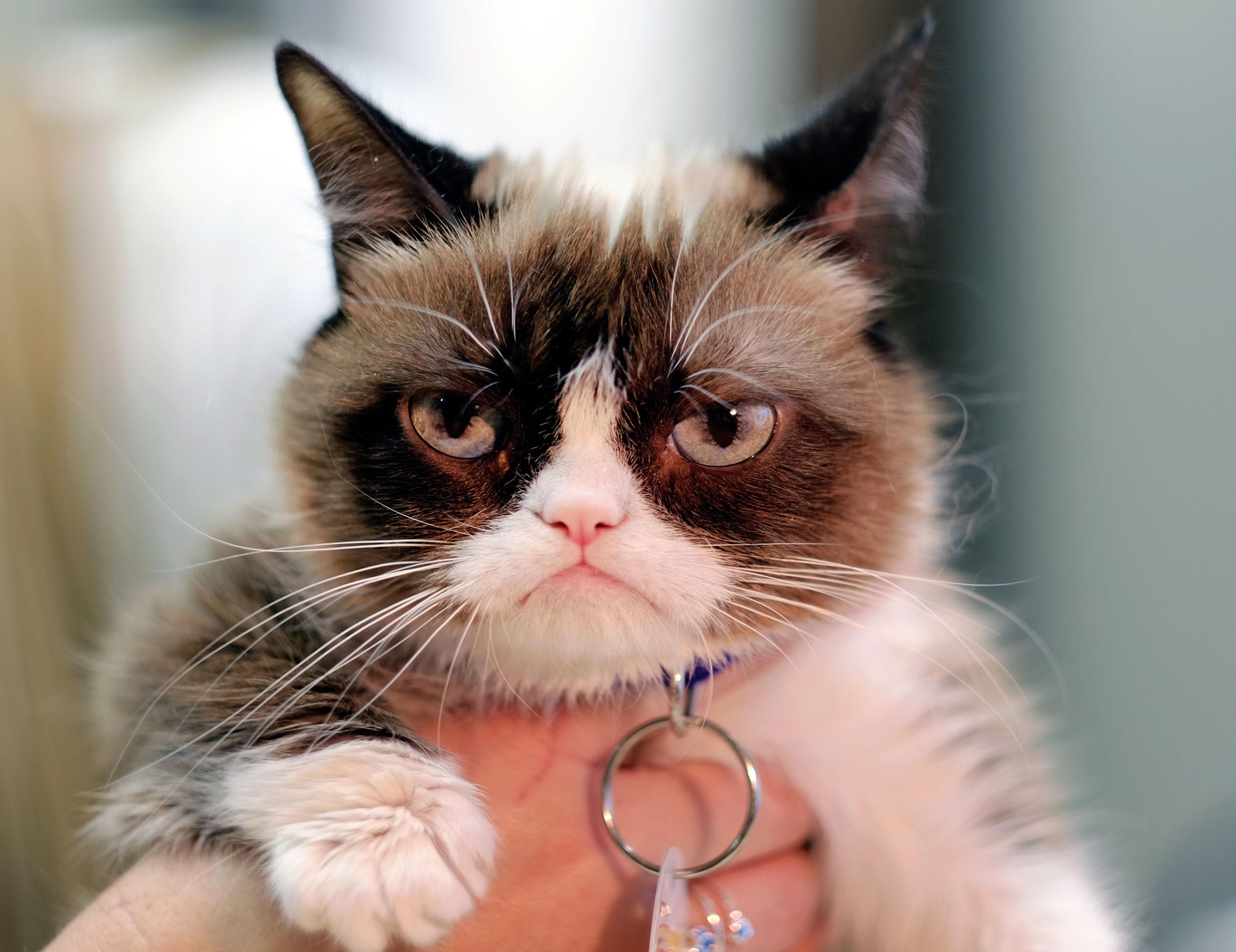 Grumpy Cat Should be Smiling!