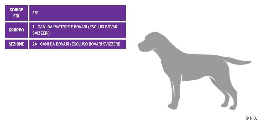 Australian Stumpy Tail Cattle Dog, carattere e prezzo