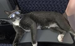 Gato con gafas: la mejor manera de tener un estilo gatuno