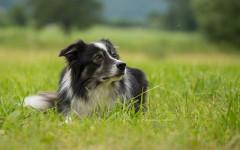 Incontinenza urinaria nel cane: cosa fare?