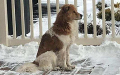 Cane abbandonato attende che la sua famiglia torni