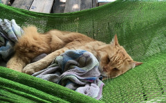 Choosing the Best Cat Hammock for Your Friend