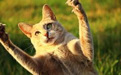 Cortar uñas de gato: ¿es importante? Come hacer