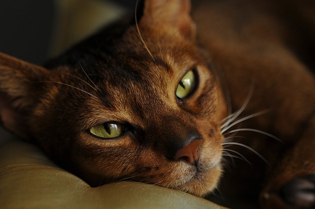 Gatto che puzza: che fare se Micio ha un cattivo odore?