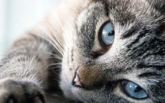Malattie respiratorie del gatto: quali sono?