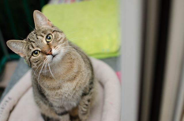 Disidratazione nel gatto: come accorgersi e cosa fare?