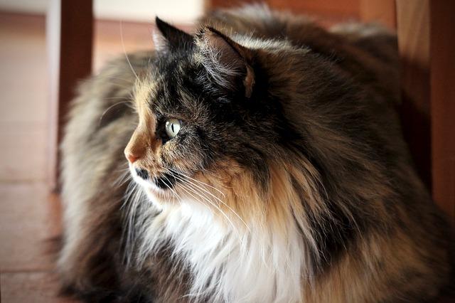 Broadline gatos: un nuevo antiparasitario