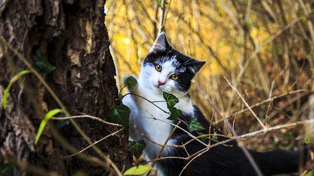 Poteri magici dei gatti: mitologia e tradizione