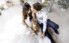 Gatti e matrimoni: quando i felini sono protagonisti ai matrimoni