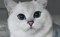 El gato más bonito del mundo: Coby, el gato mutante