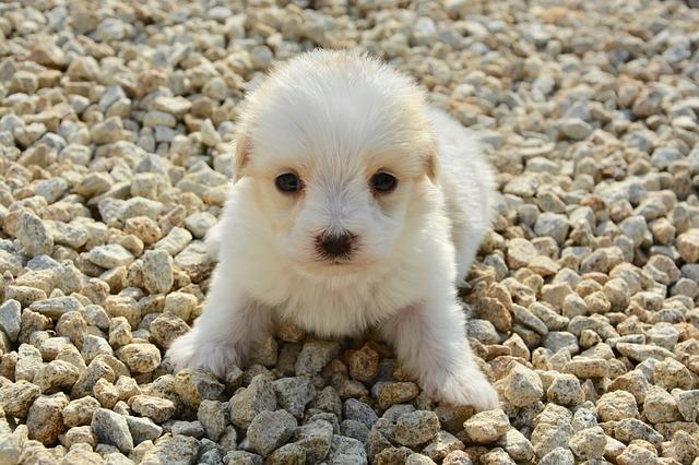 Fasi di crescita del cane: dalla nascita a 12 mesi