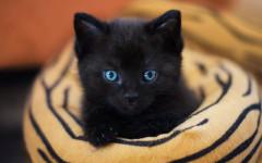 Gatos recién nacidos: los pequeños de la casa