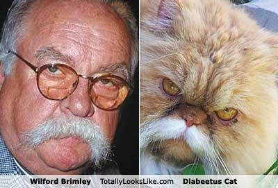 The Diabeetus Cat: A Meme From a Greater One