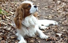 Cani condividono il cibo con i loro amici a quattro zampe