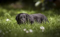 Plantas tóxicas para perros II: para recordar y prevenir