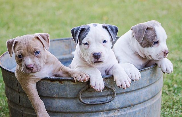 Maltrattamento cani: multa e carcere per chi maltratta gli animali