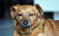 Mi perro tiembla: ¿qué le pasa a mi perro?