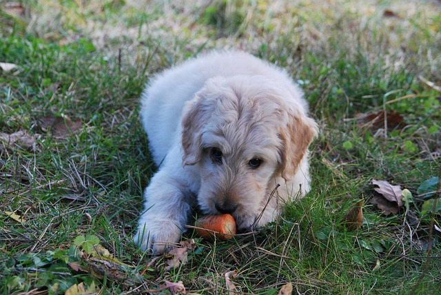 Can Dogs Eat Carrots? Benefits in dogs