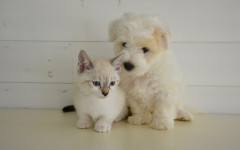 Unghie animali, come curare quelli di gatti e cani