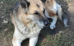 Dora cerca casa: appello per adozione