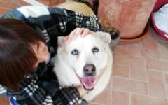 Cane vegliava proprietaria morta: vigile del fuoco lo adotta