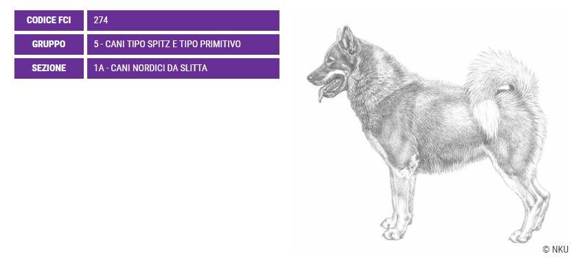 Groenlandese, carattere e prezzo - Razze cani