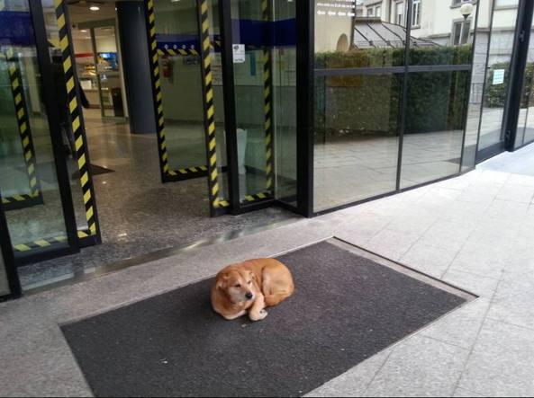 Hachiko a Tolmezzo: il cane attende il suo umano ricoverato