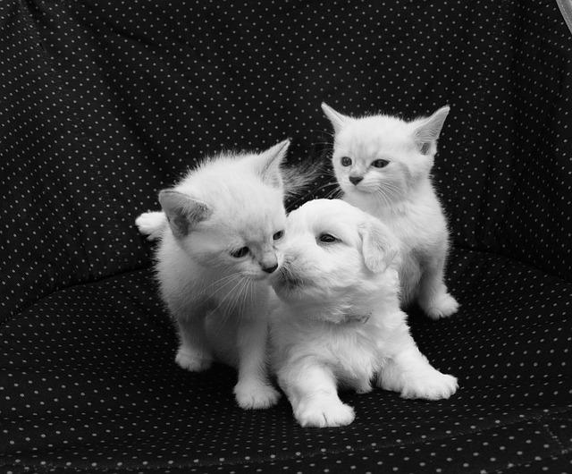 Setticemia neonatale in cani e gatti: cause, sintomi e terapia