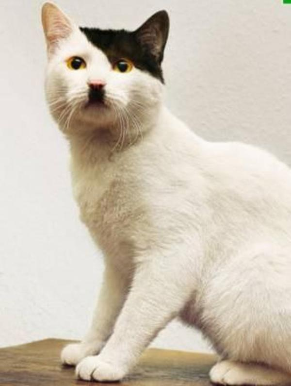 Kitler: cats that look like Hitler, meme and history