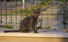 Anoressia nel gatto: la patologia e la perdita di appetito