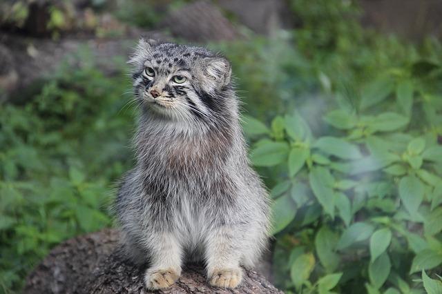 Gato Salvaje: belleza y poder de un felino singular