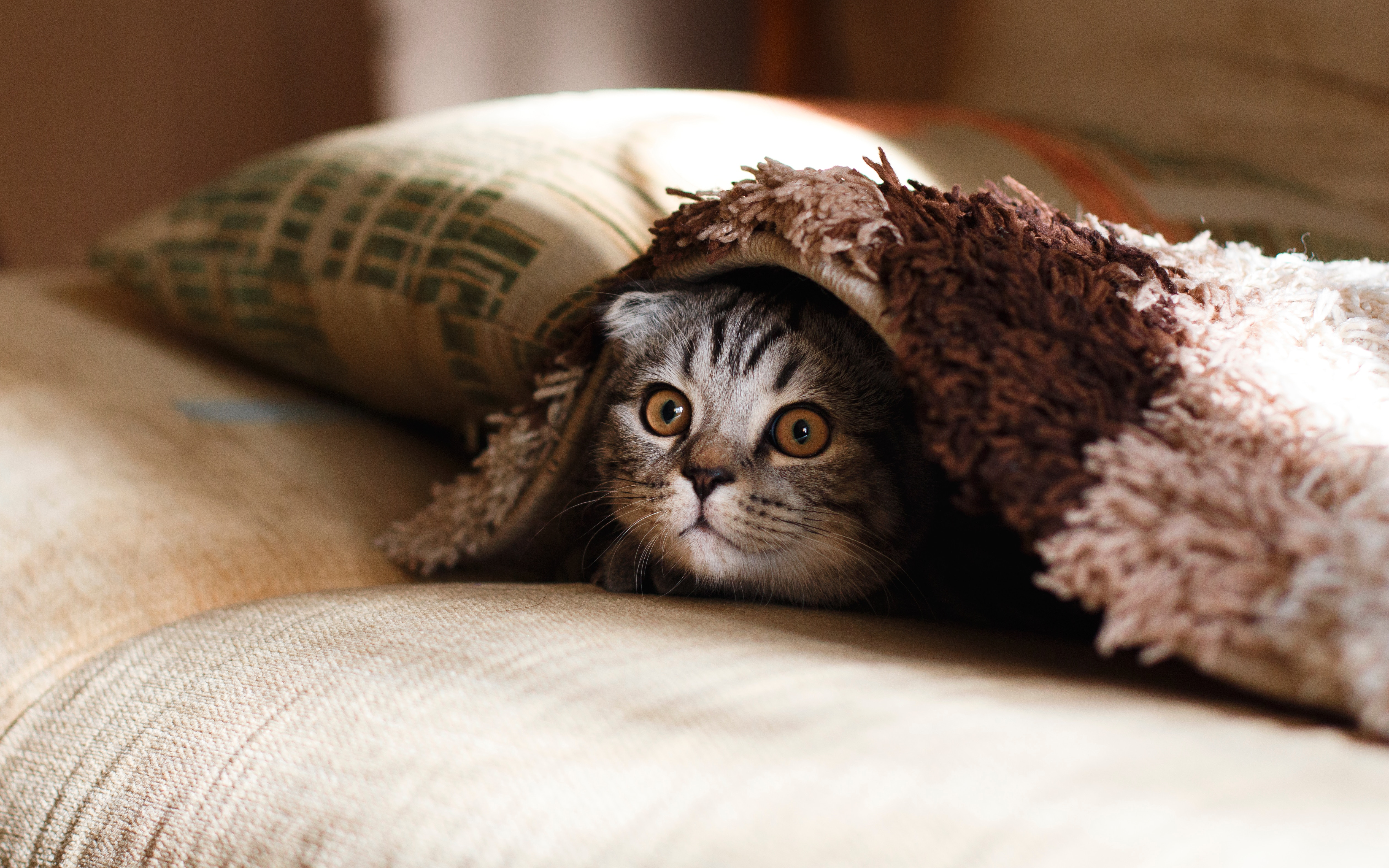 Debolezza nel gatto: che fare quando Micio è affannato?